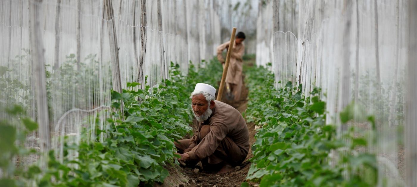 why-south-asia-needs-tackle-surge-nitrogen-pollution